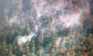 花粉症には花粉バスターが大人気。
